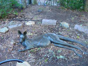 Kangaroo (Photo 2004 D Edmonds)