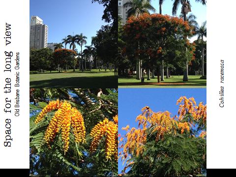 Ex Botanic Gardens Planting Design Talk: long view